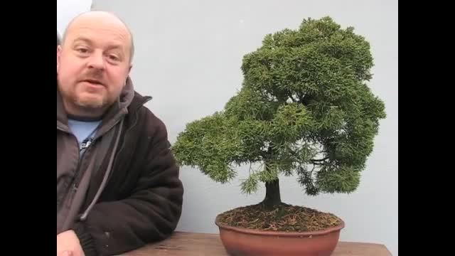 bonsai you can make at home